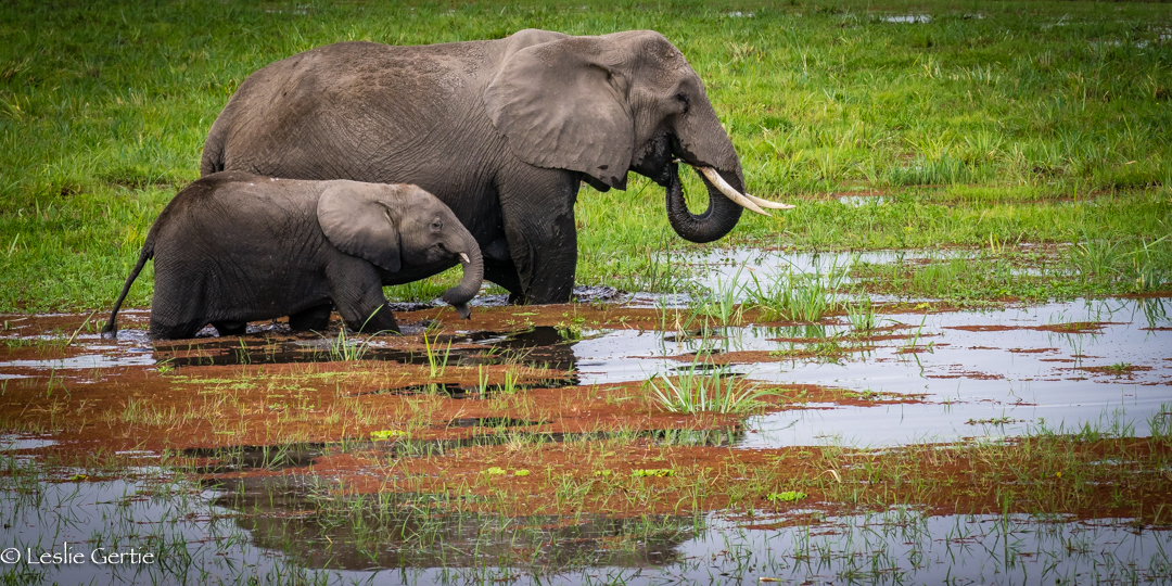 Dining in Amboseli-2665