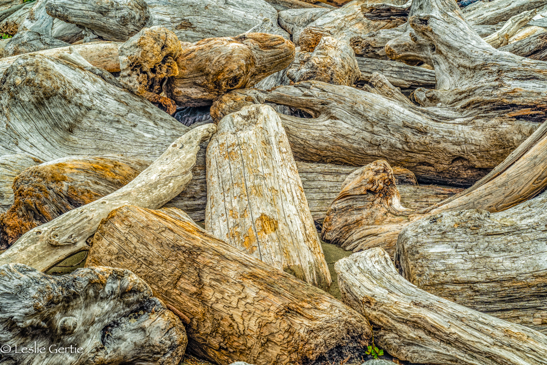 Driftwood-1008