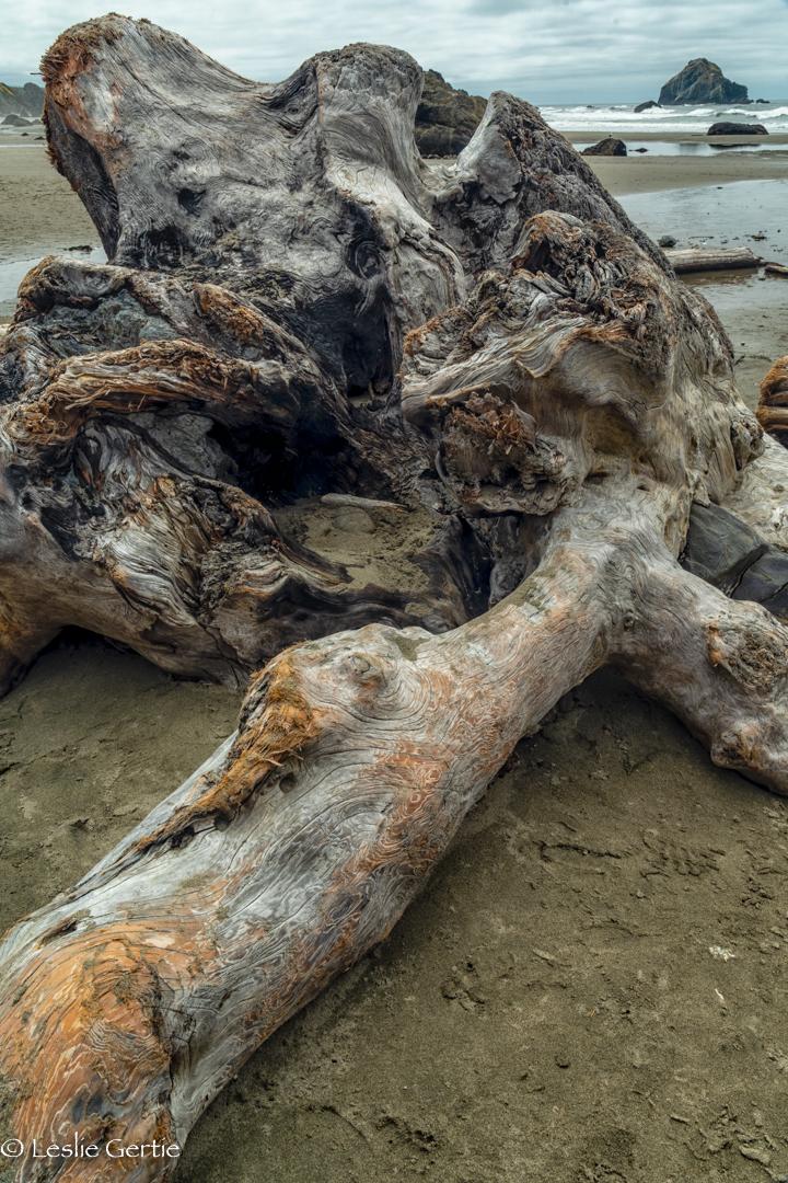 Driftwood-1013