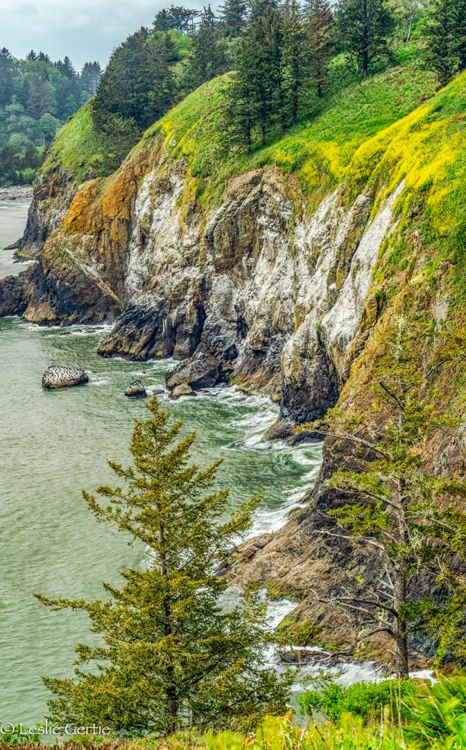 Oregon Coast-572