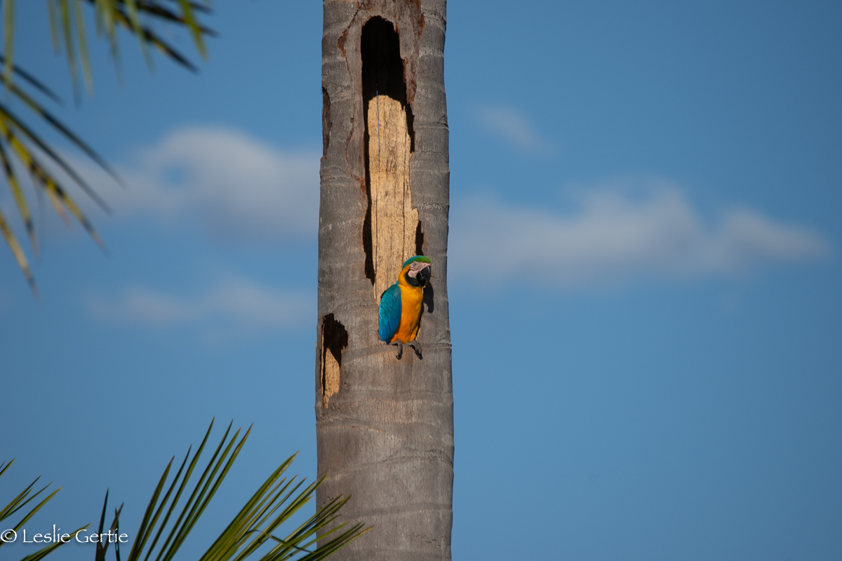 Lake of the Macaws-31