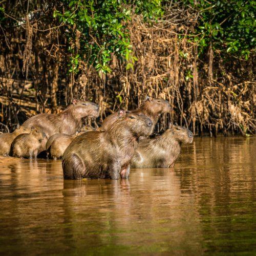 Pacybara-134