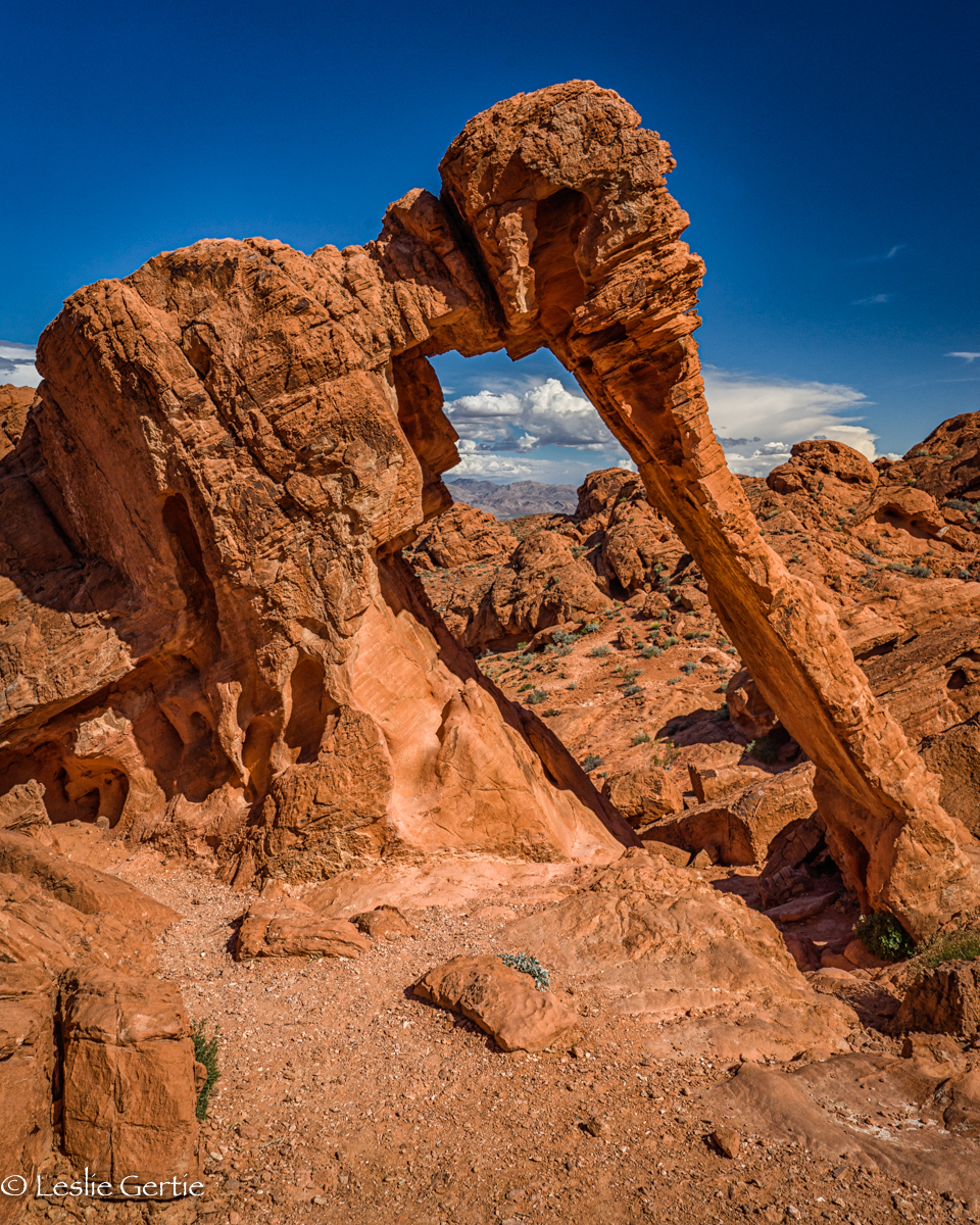Elephant in Valley of Fire-7801