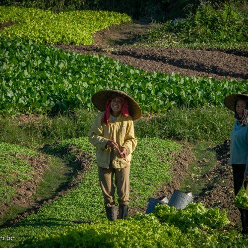 Laotian Field Workers-62
