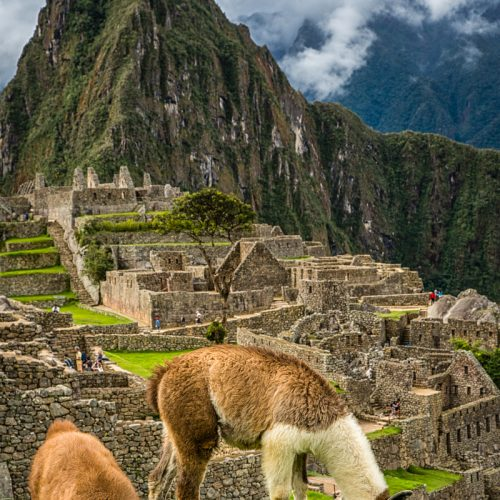 Machu Picchu-2254