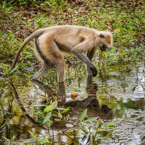 Monkey See-5180