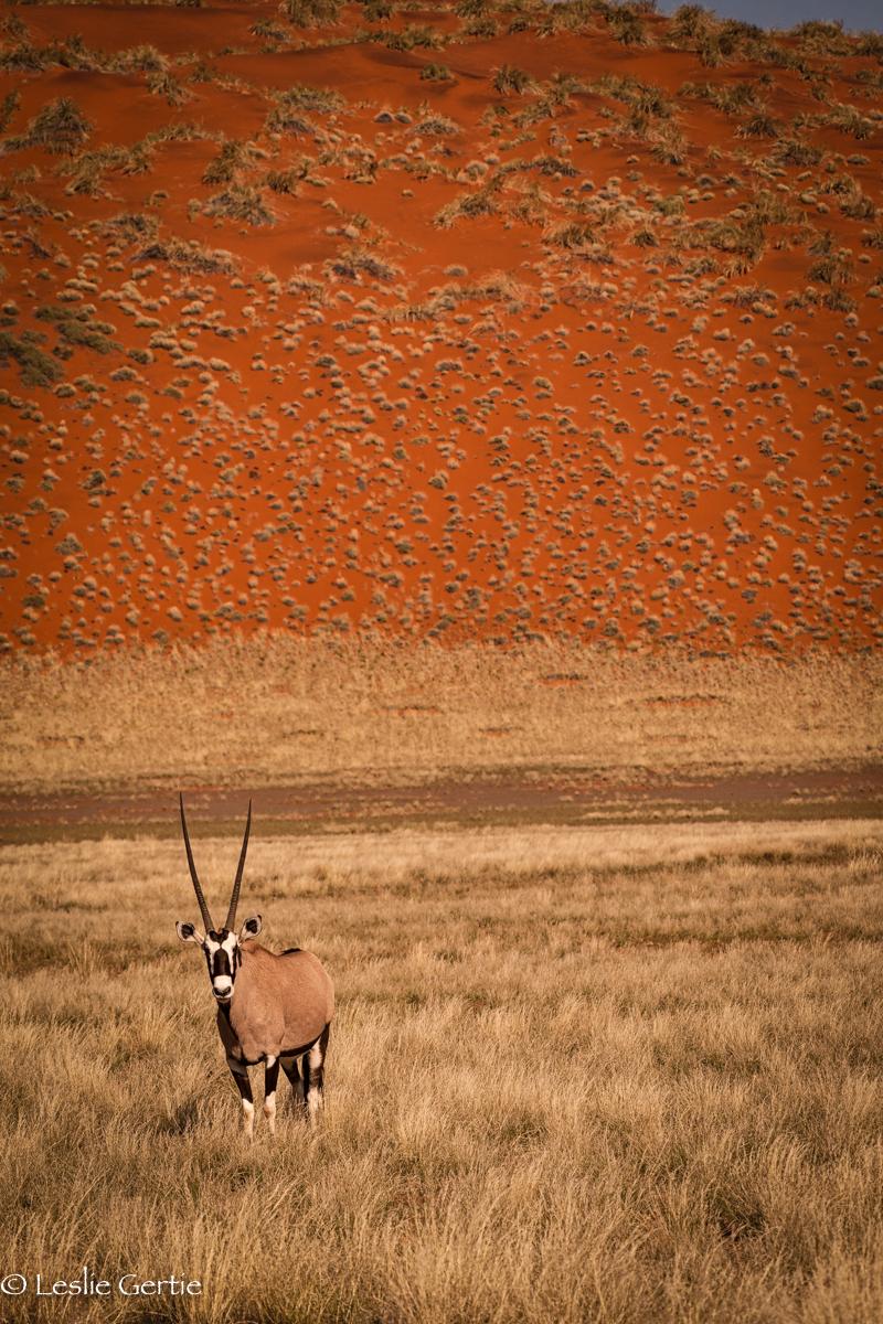 Oryx & Red Dune-6573