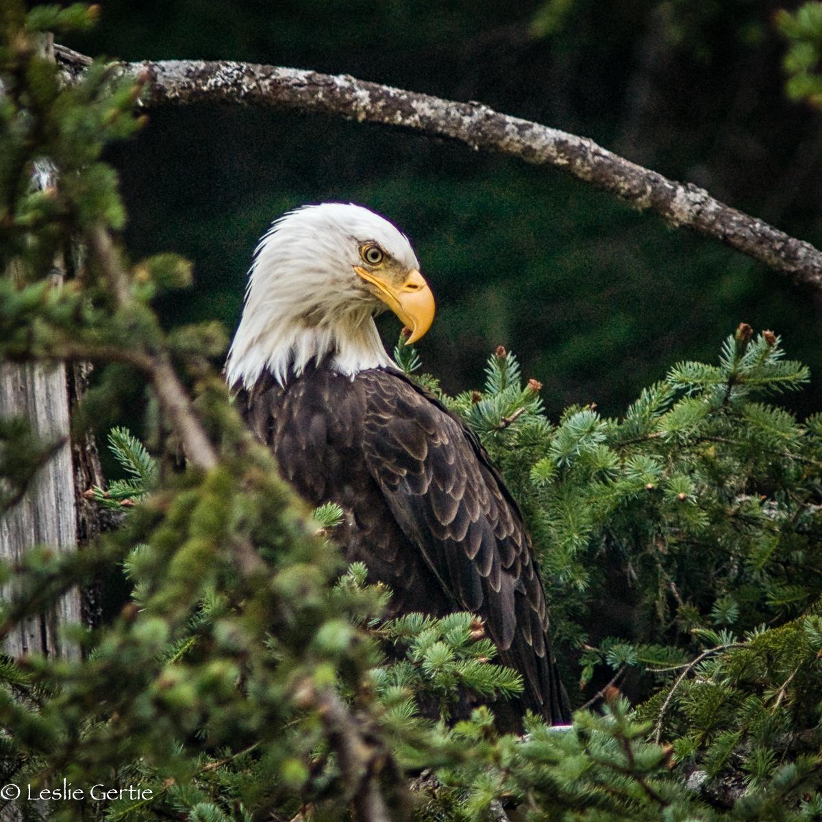 Seward Eagle-1812