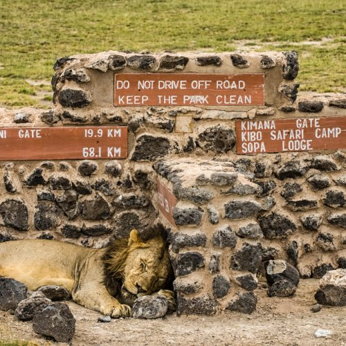 Sign of a Nap-Amboseli-2762