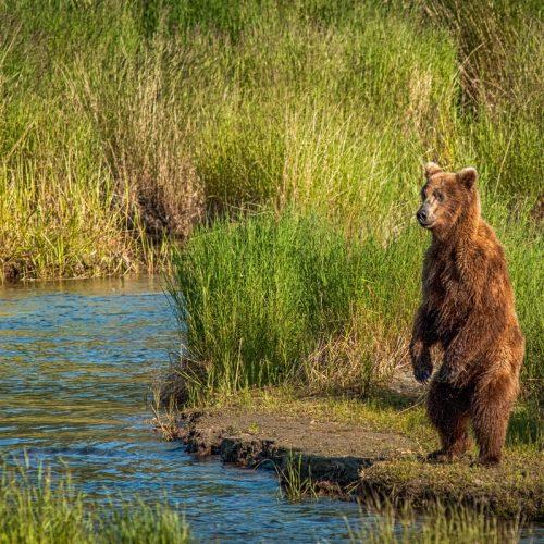 Standing Bear-1581