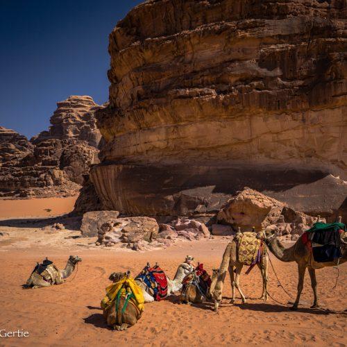 Wadi Rum-4594