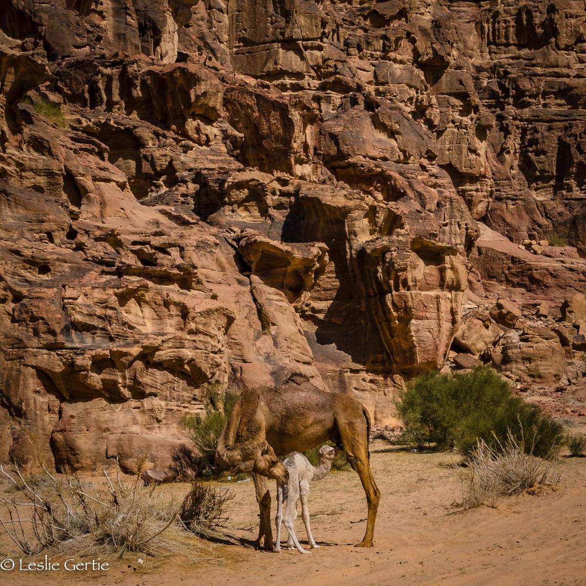 Wadi Rum-4603