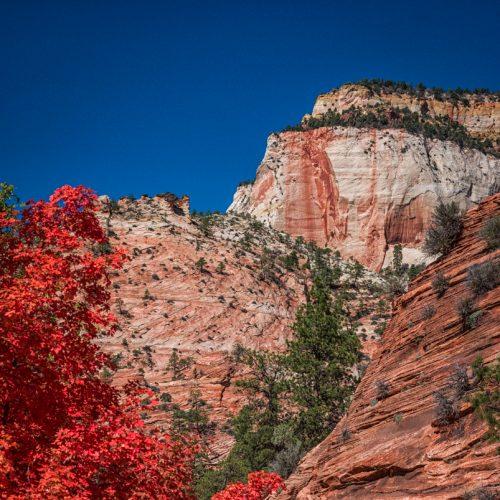 Zion in Fall-387