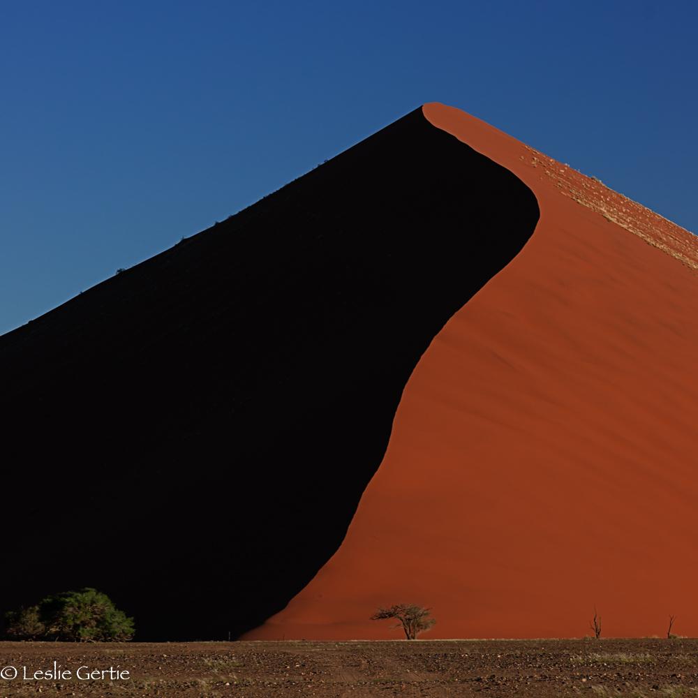 Red Dune-6219