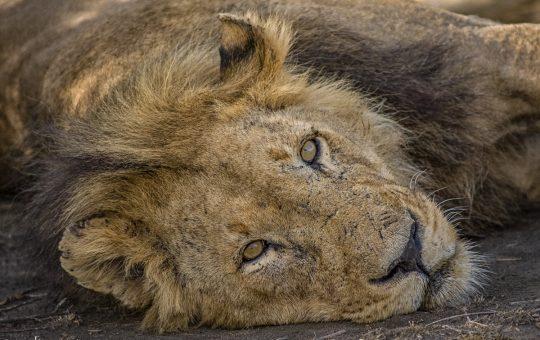 Africa 2008